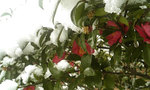 Snow4_3