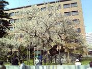 Morioka2_3