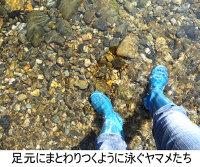 Yamame_3