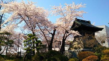 Sakura14_5