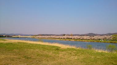 Sakura14_7