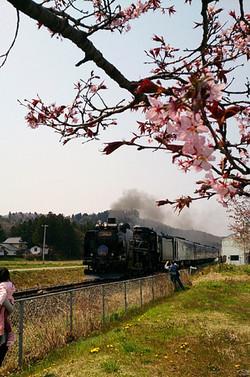 Sakura14_12