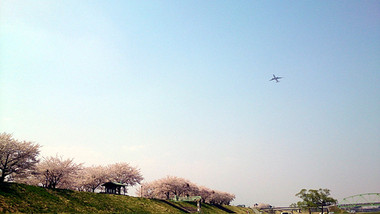 Sakura14_13