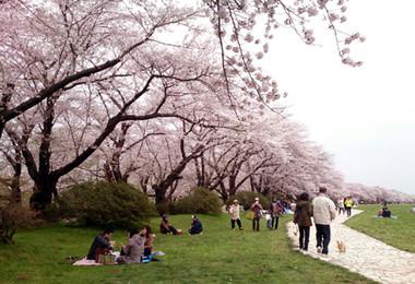 Sakura15_19