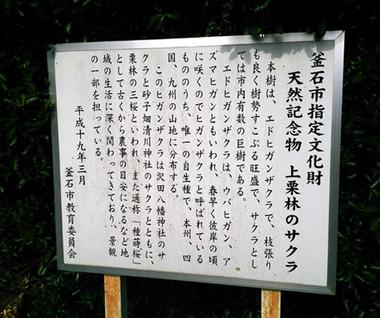 Sakura15_21