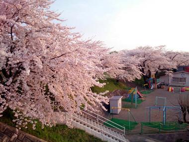 Sakura15_27