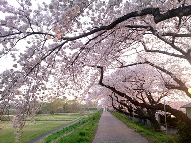 Sakura15_28
