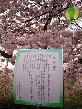 Sakura15_29