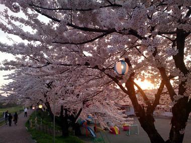 Sakura15_32