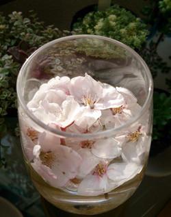 Sakura15_42