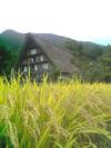Shirakawa_inaho_1