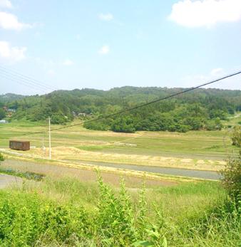 Hirasawa4